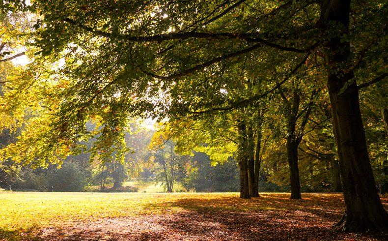 hilverbeek_trees