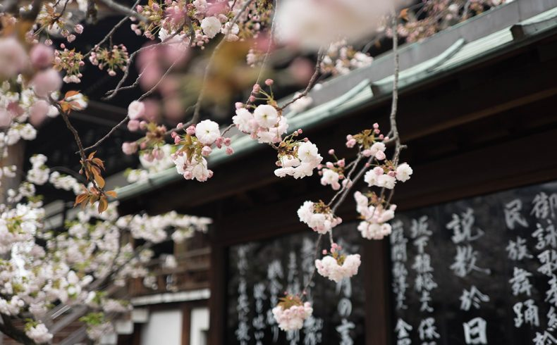 japanese_blossom