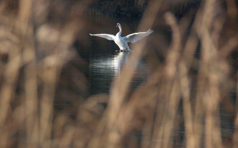 tiengemeten_birds