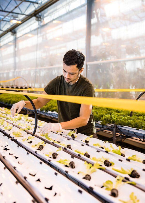Urban Farmers sustainable food