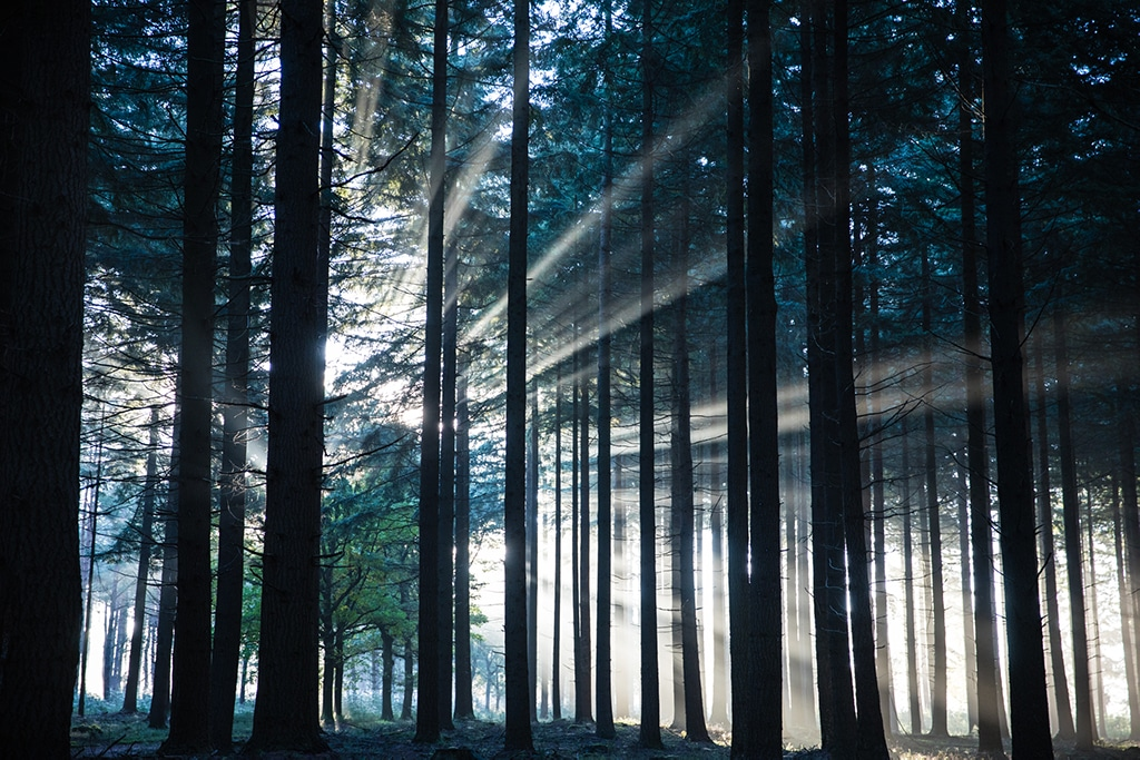 The sunlight between the trees